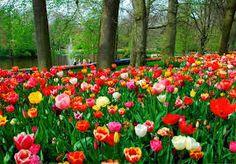 Resultado de imagem para jardins mais lindos do mundo