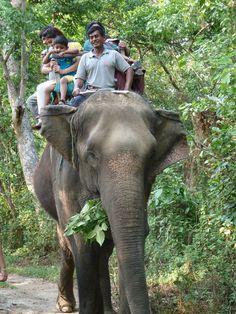The Secret Lives of Nepal's Elephants - A Vegan Blogging Extravaganza at The Flaming Vegan
