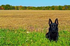 Search And Rescue Saturday-Outstanding Blog Series - Tales and Tails