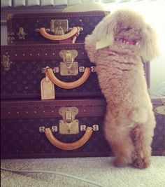 Love the Louis travel trunks.