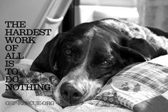 """""""The hardest work of all is to do nothing"""""""