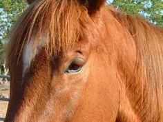 Paard en is op hol geslagen en belande met koets en inzittende de sloot in. Het paard is door dierenarts aan de wond van borst behandeld.