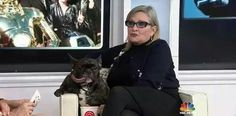 Carrie Fisher's beloved dog, Gary, was taken to see The Last Jedi, and reportedly recognized Fischer while he was watching the movie. Carrie Fisher Photos, Carrie Frances Fisher, Gary Fisher, Last Jedi, Star Wars Humor, Event Photos, Mans Best Friend, New Trends, Carry On