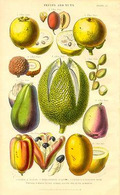 Tropical Fruit from Vegetable Kingdom by William Rhind.  Botanical prints