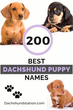 Weiner Dog Earth Day Weiner Dog Weiner Dog Humor Funny Dachshund