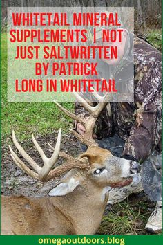 Whitetail Mineral Supplements | Not Just Salt Written by Patrick Long in Whitetail FacebookPinterestTwitterRedditSMS If you are like I was before this article, you probably do not take the time to think about your whitetail mineral supplements or what goes into them. A simple mix by a big brand or a bag of corn was good enough in my mind.#hunting #hunters #huntmexico #huntingseason #huntinglife #monsterbuck #huntingislife #huntergatherer