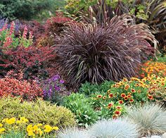 17 Top Ornamental Grasses {Pictured is Pennisetum setaceum Purpureum (Purple Fountaingrass) with burgundy-red foliage all season long; tender perennial is often used in container gardens; zones 9-10; size to 3 tall / maturity 4 tall & wide; full sun and well-drained soil} | Better Homes and Gardens