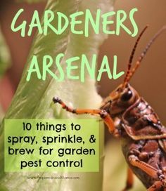 Create your own gardener's arsenal and take control with organic pest control   PreparednessMama