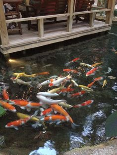 Koi Fish Pond at Elease Donovan Swimwear Shoot