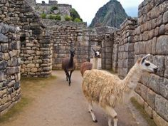 GayTravelHerald's Sample Peru Itinerary- book your Peru tour stress free with prideperutravel.com