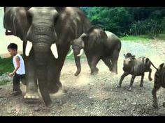 Liam07 fxguru zoo - YouTube Elephant, World, Youtube, Animals, Animales, Animaux, Elephants, Animal, The World