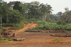 Equatorial Guinea Increases Protected Forests by 63 Percent, Shows New Atlas. Forests cover roughly 98 percent of Equatorial Guinea's national land area. Photo credit: Pascal Douard, WRI