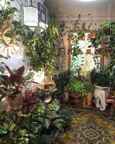 Room With Plants, House Plants Decor, Plant Decor, Plant Rooms, Plant Aesthetic, Aesthetic Room Decor, Hanging Plants, Indoor Plants, Room Ideas Bedroom