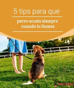 5 tips para que tu perro acuda siempre cuando lo llames   ¿Tu peludo es de los que no viene enseguida a tu lado cuando se lo pides? Te contamos algunos consejos para lograr que tu perro acuda siempre a tu llamada.  #Consejos #Perro #Acuda #Llamada