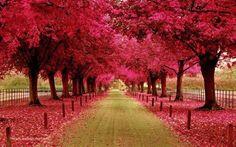 NATURE - gallery of beautiful natural roads