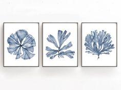 Printable Wall Art, Coral Sea Fan Botanical Print Set of 3 Gallery Wall Set, Blue Coastal Artwork Bedroom Wall Decor Over the Bed Nautical Prints, Nautical Art, Coral Watercolor, Watercolor Paintings, Original Paintings, Dandelion Wall Art, Ouvrages D'art, Impressions Botaniques, Blue Artwork