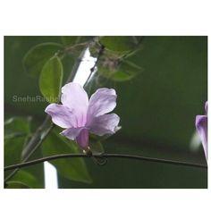 #flower#india#random