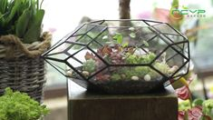 geometric  terrariums Terrarium Containers, Glass Terrarium, Terrariums, Terrarium Ideas, Planter Ideas, Small Potted Plants, Air Plants, Floating Frame, Plant Holders