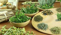 ervas-medicinais