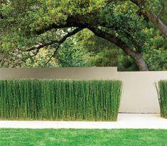 .Andrea Cochran - Landscape Architecture     (horsetail / Equisetum hyemale) Equisetos, tenemos que probarlos