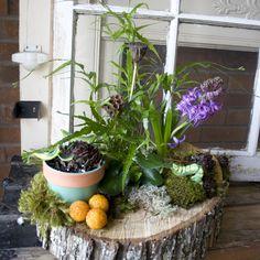 European Dish Garden Basket Orchids Dish Gardens Pinterest