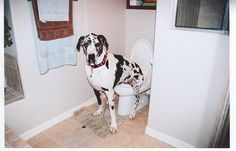 properly toilet trained, via Flickr.