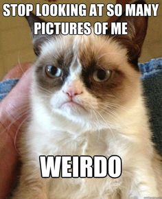 Grumpy Cat - Stop looking at so many pictures of me...