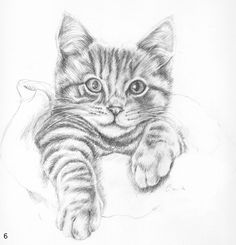 Cat Drawings In Pencil Cats Drawings Animal Drawing Cat Cats Cat Drawings In Pencil Cats Drawings Tierzeichnung Cat Cats - Besondere Tag Ideen Pencil Drawings Of Animals, Animal Sketches, Art Drawings Sketches, Drawings Of Cats, Realistic Drawings Of Animals, Drawing Faces, Simple Cat Drawing, Drawing Ideas, Realistic Cat Drawing
