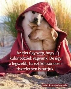 Motivation Inspiration, Dogs And Puppies, Quotations, Fun Facts, Buddha, Cute Animals, Wisdom, In This Moment, Pets
