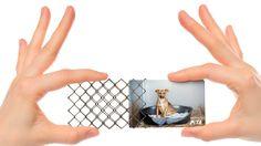 Adeevee - PETA: PETA Business Cards