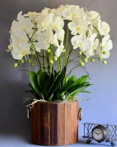 Shop over 100 beautiful artificial flower arrangements. Shop direct at Demmerys. Orchid Arrangements, Artificial Flower Arrangements, Artificial Orchids, Display, Plants, Handmade, Beautiful, Fake Flower Arrangements, Floor Space