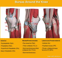 Knee Bursas and Their Significance | Bone and Spine