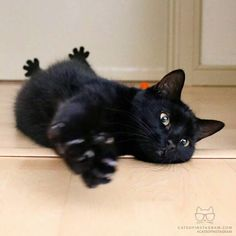 his kitty is prettier than most humans. Click the Photo For More Adorable and Cute Cat Videos and Photos Crazy Cats, I Love Cats, Cute Cats, Funny Cats, Pretty Cats, Beautiful Cats, Animals And Pets, Cute Animals, Tier Fotos