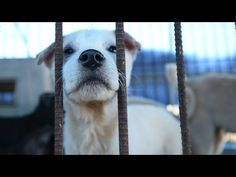 200 dogs rescued from dog meat farm - YouTube