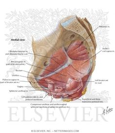 15 Best Get To Know Your Pelvic Anatomy Images Pelvic Floor