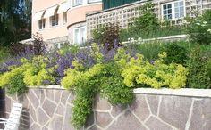 Tankar från Trädgårdsmästarn: Växter som Växer bra och Täcker t.ex Slänten Rosor, daggkåpa, kantnepeta i slänten. Täcker bra och håller undan ogräset.