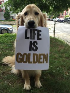 """Life Is Golden"" The Easy Way - Expert Dog Training Videos for Any Dog or Puppy http://dkdogtrainingtips.com/"