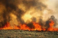 brush fire - flood and erosion monitoring control Survival Prepping, Emergency Preparedness, Survival Gear, Survival Skills, Survival Backpack, Light Em Up, Light In The Dark, Erosion Control, Wild Grass