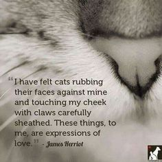 The gentle love of a cat... so often misunderstood.