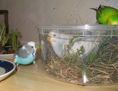 ♥ Pet Bird Stuff ♥ Plastic Container Bird Foraging Box - Make a foraging container for your birds! Find a plastic container that is several times larger than your pet and remove the lid. Fill the box with pet-friendly straw, sticks, rocks and other natural products such as bark, pine cones or pine needles. Toss bird seed into the box for your pets to find and replace the digging materials as needed.