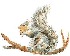 Woodland nursery boy nursery art squirrel by LightheartedDreamer