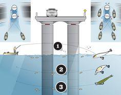 Catch Bass Under Bridges With These Tips - http://www.ecosnippets.com/livestock-animals/catch-bass-under-bridges-with-these-tips/