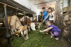 Introduce your kids to farm life! Showing your children the importance of farmers and their work is crucial in today's digital world. You can do just that while visiting tourist farms of Koroška. Cultural Experience, Sports Activities, Farm Life, Farmers, How To Introduce Yourself, Children, Kids, Digital, Animals