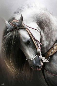 mistymorrning: (via (JPEG Image, 580 × 871 pixels) - Scaled Beautiful Horse Pictures, Beautiful Arabian Horses, Majestic Horse, Most Beautiful Animals, Cute Horses, Pretty Horses, Horse Photography, Fantasy Photography, Stunning Photography