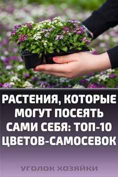 Best Friend Photography, Vegetable Garden Design, Small Farm, Garden Paths, Herbs, Plants, Flowers, Beautiful Flowers, Bonito