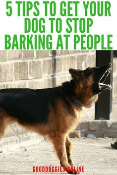 Dog Behavior If your dog barks at people, here are 5 ways to stop your dog barking at people. Diy Pet, Stop Dog Barking, Best Dog Training, Training Plan, Tips & Tricks, Dog Hacks, Dog Behavior, Dog Care, Dog Grooming