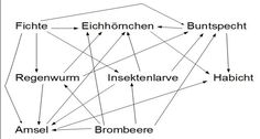 Einsendeaufgabe ILS Biologie: Pflanzen und Zellen BioE-1-XX1-K08 - Einsendeaufgabe  ILS/SGD Biowissenschaften Line Chart, Insects, Animal Cell, Earthworms, Plant Parts, Biology