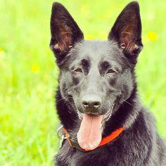 Pretty Olive! #evasplaypupspa #blackdog #endlessmountains #springtime #mountpleasant