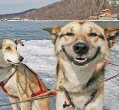 Los perros expresan emociones