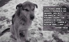 Love perros, porque amarlos...